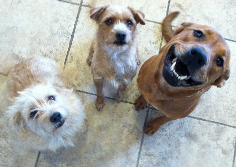 Hawaii Dog Sitters & Pet Services