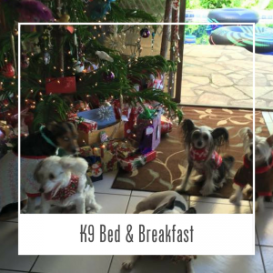 Dog Bed & Breakfast Hawaii