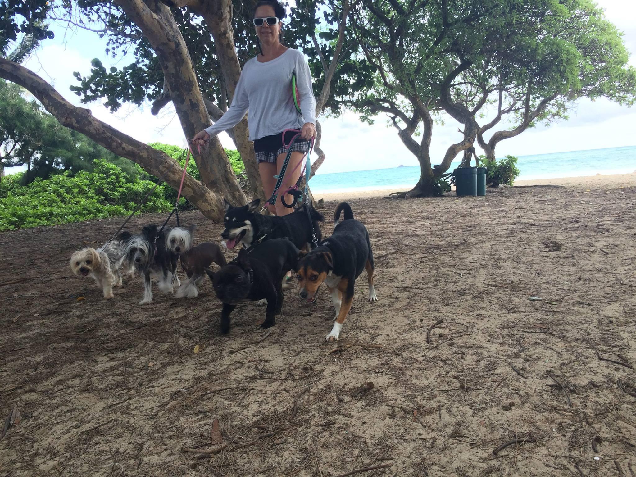 Dog Walking Service Hawaii
