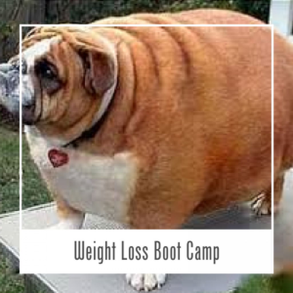 Weight loss winnipeg image 9