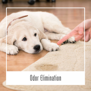 Pet Odor Elimination Service Hawaii