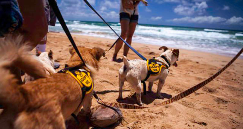 Dog Adventures Oahu