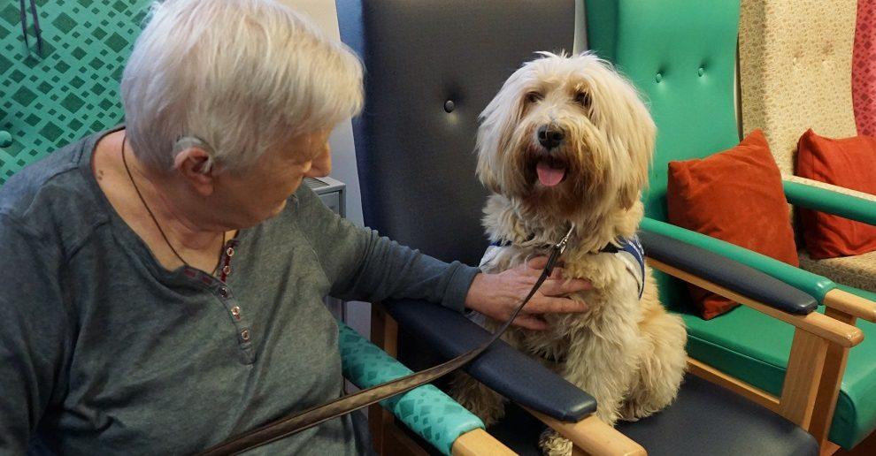 Elderly Pet Care Hawaii