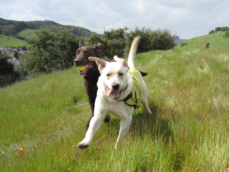 Oahu Dog Adventures