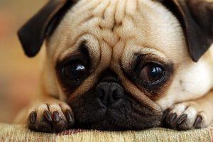 the-dangers-of-dog-poop