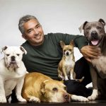 whats-the-difference-between-a-dog-trainer-and-a-dog-whisperer